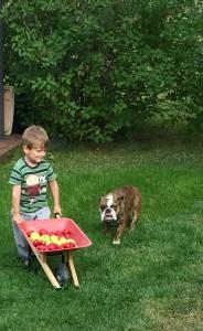 Elliot & Madicken samlar Äpplen